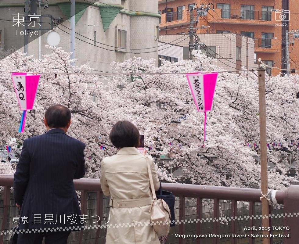 Cherry blossoms on the Meguro River