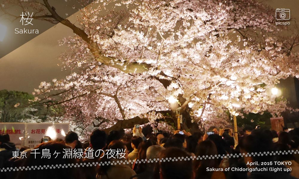 Chidorigafuchi : Cherry blossoms at night