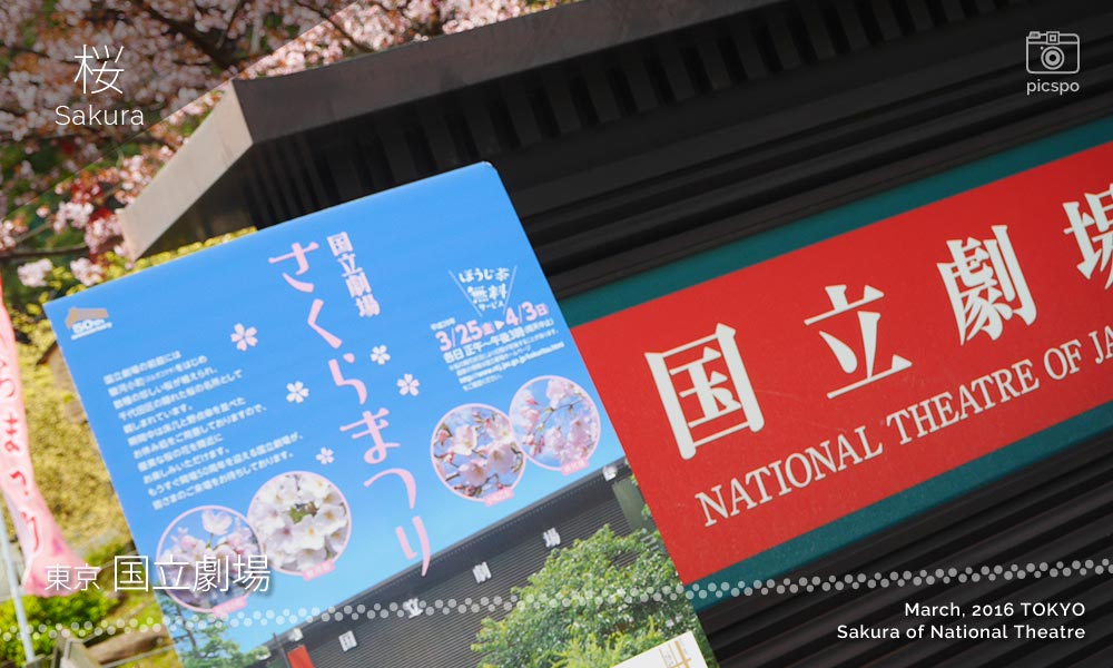 Cherry blossoms : National Theater (国立劇場)